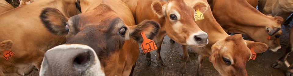 Nebraska Dairy Industry Development Board